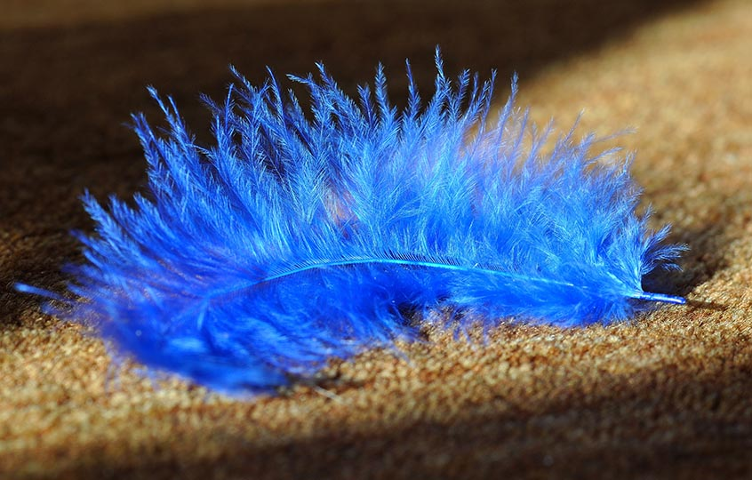 blue feather on carpet