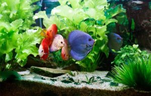 Basic aquarium plant care