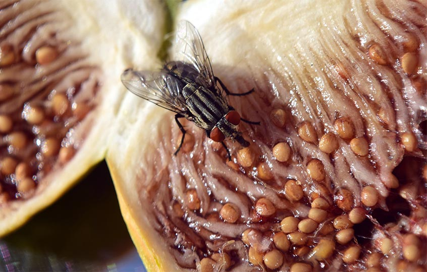 fly on food photo