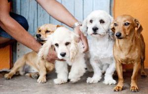 Adopting dogs – everything you need to know